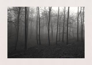 Houghton Woods