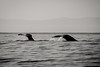 monsters (evan.glass) Tags: whales mexico bw