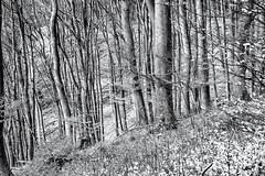 Show me the Way, please... (Ody on the mount) Tags: anlässe bäume em5ii landschaft mzuiko4518 omd olympus pflanzen schwäbischealb wald wanderung bw forest landscape monochrome sw trees