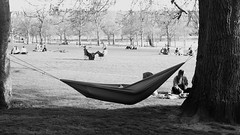 the right idea (byronv2) Tags: edinburgh edimbourg scotland spring sunny sunshine sunlight peoplewatching candid street man hammock relaxing napping tree hanging meadows park banc