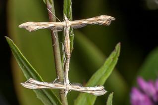 H-Moth, I Guess - _TNY_0745