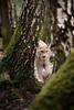 DSC_5521 (Firas Abolfadl) Tags: hanau steinheim luchs animals wild natur woods wildpark