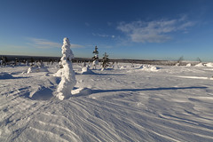 Winter in Finnish Lapland (Joost10000) Tags: snow sky ice tree forrest hills winter lapland finland suomi saariselka landschaft landscape frozen canon canon5d eos wild wilderness scenic cold chill view arctic
