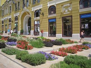 flowers in Pecs