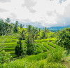 Jatiluwih Rice Terraces (si_glogiewicz) Tags: rice terrace terraces food farming farm asia indonesia green vegetation lush agriculture bali jatiluwih unesco work herritage travel trip scenery verdant plants