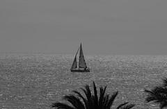 Navegando por la Bahia en silencio. (angelalonso4) Tags: casco mastil vela agua mediterráneo water nautica paisaje paisage bw skay 70300mm 3000 canon eos 6d ƒ250 mm 1125 100