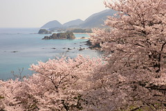 Sakura (Teruhide Tomori) Tags: 丹後松島 京都 丹後半島 日本 京丹後 日本海 風景 tangopeninsula landscape shore japan seashore beach japon sun kyoto tango sea tangomatsushima sunrise 朝日 海岸 日の出 sakura cherry spring nature サクラ 春 花 海 ocean coast 丹後町 happyplanet