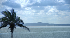 Cuba (Poocher7) Tags: palm coconutpalmtree varadero cuba ocean sparkles water clouds mountains prettyview gulfofmexico sundaylights