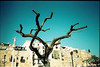catalan tree in winter (the heart has a mind of it's own) Tags: tree catalunya spain blue oldhouse citadel tarragona leica
