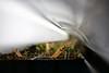 Lacinato Kale Seedlings (thatSandygirl) Tags: seedlings kale lacinatokale dinosaurkale seedstarting fluorescent bulb growlight shoplight plants leaves stems green soil flats popsiclestick craftstick depthoffield bokeh spring earlyspring