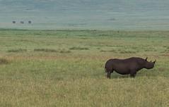 89 (Maryna Beliauskaya) Tags: rhino animal tanzania africa mammal wildlife nature nationalpark rhinoceros