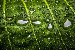 Path (::: M @ X :::) Tags: drops lluvia rain hoja leaves green verde agua water nature fav10 fav20 fav30 fav40 fav50 fav60 fav70 fav80 fav90 fav100 fav110 fav120 fav130 fav140 fav150 fav160 fav170