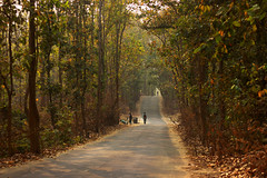 Old elephant road (Ruhul Sumon HunTer) Tags: sherpur gajni bangladesh landscape cycling forest bor bordersideroad