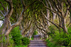 Dark Hedges #3 (efgepe) Tags: 2018 irland lightroom mai dark hedges darkhedges gameofthrones farbe color colour bäume tree trees buche buchen nordirland northern ireland 200mm