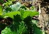 Morning dew (Tabea-Jane) Tags: morningdew droplets water nature leaf morgentau tropfen wasser natur laub