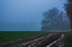 Fog in Hitchin (dusk_rider) Tags: 7dwf landscape hitchin countryside england fog trees mud tire tracks wet water rain field nikon d7200 1224mm f4