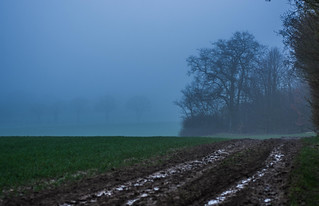Fog in Hitchin