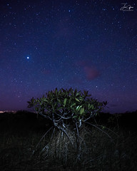 Dwarf Mangrove (J.Coffman Photography) Tags: night dwarf mangrove everglades national park season wet preserve state fl sunshine wilderness hiking hike d810 nikon clouds marsh forest states united florida big cypress landscape trees swamp stars