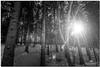 DECEMBER 2017  NGM_6965_3607-1-222 (Nick and Karen Munroe) Tags: wintry winter winterwonderland heartlakeconservationarea heartlakeconservation heartlakepark heartlake conservationarea conservation landscape landscapes snow snowy cold freezing bitter wind winds windy karenandnick munroe karenmunroe karen ontario outdoors brampton bramptonontario ontariocanada nikon nickandkaren nickandkarenmunroe karenick23 karenick karenandnickmunroe nature canada nick d750 nikond750 nikon1424f28 1424 1424f28 munroedesigns photography munroephotoghrpahy nickmunroe munroedesignsphotography munroephotography munroenick beauty brilliant blackandwhite bw blackwhite bandw monochrome mono sunset settingsun dusk tree trees forest forests woods wood