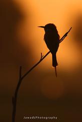 Peaceful Moment ! (Jawad_Ahmad) Tags: nature naturephotography natyre natureart beautyofnature beautiful lastlight goldenlight sunset dawntodusk birdwatcher birdphotography wildlifephotography wildlifeofpakistan wilbird flicker canon