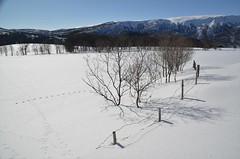 gjerding / fence (KvikneFoto) Tags: landskap vinter winter snø snow tamron nikon natur norge hedmark kvikne