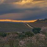 Campos de Laguardia - Fields of Laguardia thumbnail