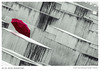 ROTER REGENSCHIRM (manooolo7) Tags: berlin holocaustmemorial umbrella red paraguas germany 365dias