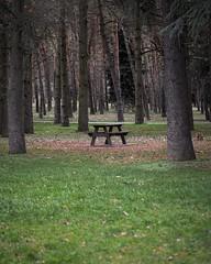 L'assemblée (CaroDiario) Tags: parc park bois woods sapins pines banc bench arbres trees panasonicdcgh5 lumixg425mm17