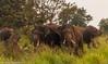 Kings (ShehanT) Tags: tusker elephant naturephotography nature naturesrilanka ngc mothernature wildlife wildlifephotography srilanka canoneos70d canonef70300mm