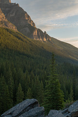 Pines in Canada (Ken Krach Photography) Tags: banffnationalpark