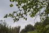 Ψίνθος (Psinthos.Net) Tags: ψίνθοσ φύση εξοχή μάρτησ μάρτιοσ march psinthos nature countryside valley psinthosvalley κοιλάδα κοιλάδαψίνθου κοιλάδαψίνθοσ πλάτανοσ planetree tree δέντρο χόρτα greens κλαδιάδέντρου treebranches κλαδιάδέντρων reeds shrubs θάμνοι καλάμια καλαμιέσ χωράφι field leaves φύλλα πρασινάδα greenery spring άνοιξη sky cloudiness cloudy ουρανόσ συννεφιά yellowflowers flowers wildflowers κίτριναλουλούδια άγριαλουλούδια αγριολούλουδα λουλούδια πικροδάφνη oleander wire cable καλώδιο σύννεφα clouds cloud σύννεφο νέφη λάζαροι λαζάροι lazarus σπόροι seeds