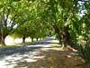 Barkly Street, Glenlyon, Victoria (Diepflingerbahn) Tags: barklystreet c316 glenlyon victoria goldfields elmtrees loddonriver panasoniclumixdmctz80