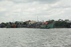 Mekong Delta (CATDvd) Tags: catdvd davidcomas httpwwwdavidcomasnet httpwwwflickrcomphotoscatdvd september2017 cộnghòaxãhộichủnghĩaviệtnam repúblicasocialistadevietnam repúblicasocialistadelvietnam socialistrepublicofvietnam việtnam vietnam nikond70s rio riu river deltadelmekong đồngbằngsôngcửulong mekongdelta landscape paisaje paisatge barca boat