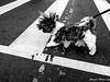 IMG_20180311_073309 (Cougar-Studio) Tags: huaweimate10probycougar huawei mate10pro mobilephone 手機 blackwhite bnw 黑白 dog 狗 西施犬 樂樂 大安區 台北市 台灣