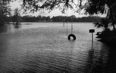 Sinking Tire Swing (PositiveAboutNegatives) Tags: leica leitz rangefinder m3 vintagecamera leicam3 50mm 50mmsummicrondr dualrange film analog foma fomapan fomapan100 rodinal coolscan floralcity florida tire swing