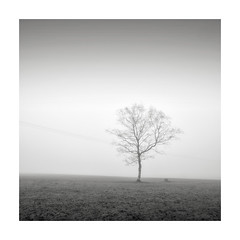 Frailty (GlennDriver) Tags: black white long bw mono monochrome tree lone square canon sussex countryside country england uk