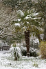 Palms in snow (smir_001) Tags: march spring tree snowing snow lines victoriapark garden plants england bath somerset avon britishgardens royalvictoriapark botanicalgarden flora attractive canoneos7d british landscape bench white historical city palmtree palms