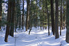 Dukes Research Natural Area, February 2018-3 (Nathan Invincible) Tags: dukes research naturalarea dukesresearchnaturalarea upperpeninsula up michigan michigansupperpeninsula mi marquette marquettecounty winter ski backcountry backcountryski snow oldgrowth forest usforestservice woods hemlock hemlocks