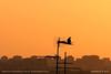 Waiting for the signal (srkirad) Tags: bird antenna roof standing silhouette summer warm hot sunny skyline travel belgrade beograd serbia srbija outdoor buildings skyscrapers