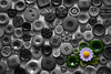 Spring  in the drawer (mariola aga) Tags: canvas buttons daisy flower bw blackandwhite selectivecolors macro closeup art thegalaxy