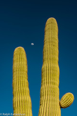Framing the Moon (Ralph Earlandson) Tags: cactus arizona saguaro tucson moon casatierra desert sonorandesert dailyrayofhope2018 droh