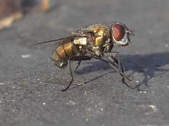DSC08975 (familiapratta) Tags: sony dschx100v hx100v iso100 natureza inseto insetos nature insect insects