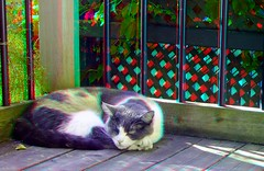 rosie-sunning---dubois_8645839813_o (irrational.photography) Tags: rational irrational photography photo irrationalphotography rationalphotography irrationalphoto montreal quebec canada anaglyph stereo stereograph picture red cyan blue magenta 3d anaglyphs fuji fujifilm w3 finepix