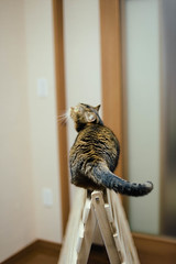 2017.10.7: elisa (Nazra Z.) Tags: munchkin cat pet home indoors raw okayam okayama japan 2017 vscofilm