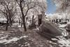 Cimetière de Montparnasse (PLF Photographie) Tags: paris nature végétation foliage infrarouge infrared ir filter filtre white cemetery montparnasse cimetière tombe monument