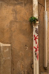 0156 - Living pipe (Guillaume Lictevout) Tags: aixenprovence living pipe pipes life tag tags graff graffiti graffitis plant plants wall walls crack cracks mur murs plante plantes vie vivant urban urbain lifestyle green vert red rouge