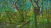 20180402_163720_m (wos---art) Tags: bildschichten wald sträucher bäume äste fusweg wildwuchs natur natürlich gewachsen