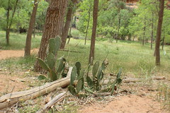IMG_3768 (Egypt Aimeé) Tags: narrows zion national park canyons pueblos utah arizona