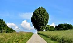 Perspective vers l'infini. (Diegojack) Tags: lonay vaud suisse paysages printemps route perspective ciel nuages arbres d7200 campagne groupenuagesetciel