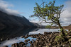 Waters Edge (fieldino34) Tags: beautiful morning surreal calm still cumbria nationalpark countryside england rocks blue contrast green nikonphotography nikond750 nikon spring mountains mountain lake lakes lakedistrict wastwater water lonelytree tree